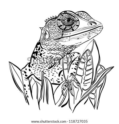 sketch of a lizard sitting on a