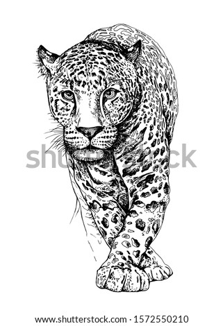 sketch of a walking leopard