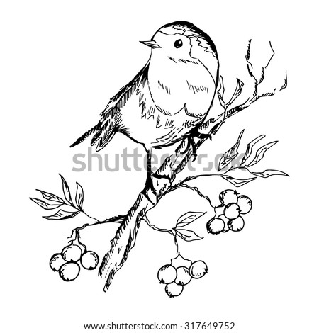 sketch of bird sitting on a