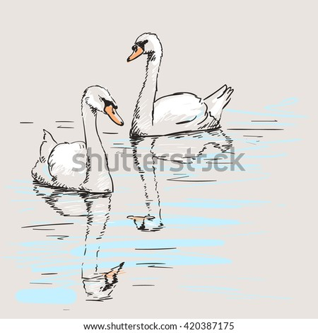 sketch of couple of swans with