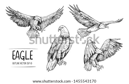Sketch of eagle. Hand drawn illustration converted to vector Foto stock ©
