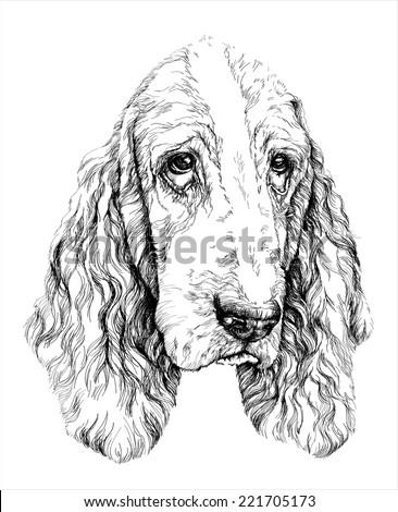 Sketch of funny Basset Hound dog. vector illustration