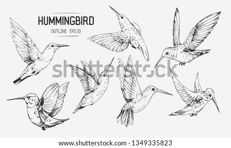 Sketch of hummingbirds. Hand drawn illustration converted to vector Stock photo ©