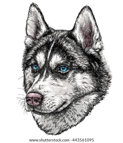sketch of husky dog vector
