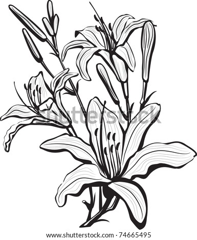 Lily Flower Outline