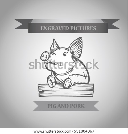 Sketch of pig. Pork.Engraved boar. Pork. different poses pigs. pigs engraved image. Funny pig.  sketch ink pigs.Ofort of pig. Logo or label with pig. Etching boar.