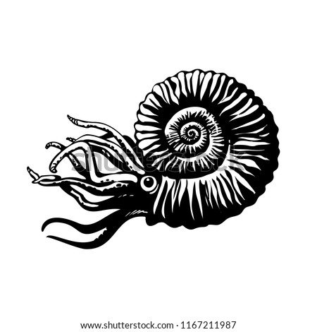 Sketch of prehistoric ammonite. Extinct marine mollusc. Black and white isolated hand drawn vector illustration.