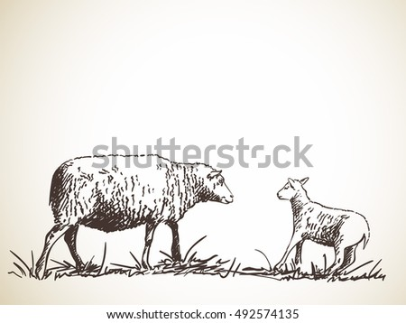 sketch of sheep and lamb