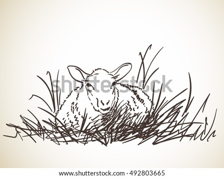 sketch of sheep lying in grass