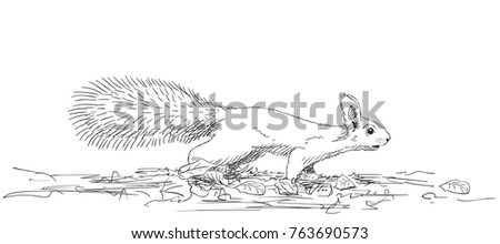 Sketch of squirrel with fluffy tail running on ground on four legs, Hand drawn vector illustration with hatched shades