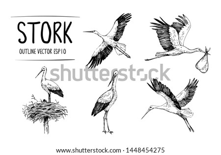 Sketch of stork illustrations. Hand drawn illustrations converted to vector Foto d'archivio ©