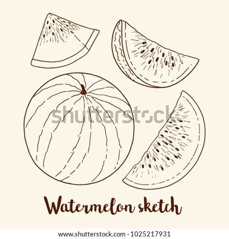 sketch of watermelon  whole and