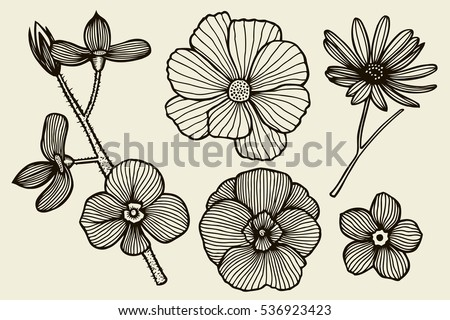 Black Line Flower Drawing : Lotus flowers leaves drawings illustrations creative market