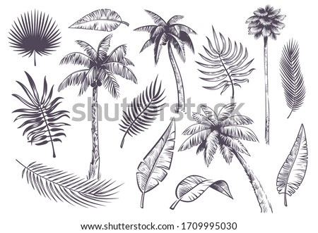 Sketch palm trees and leaves. Hand drawn tropical palms and leaf, black line silhouette exotic plants hawaii natura, engraving vector beach landscape set Foto d'archivio ©