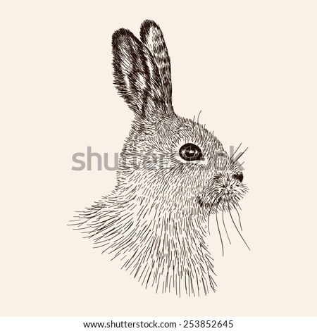 Sketch rabbit Hand drawn the hare Realistic vector illustration