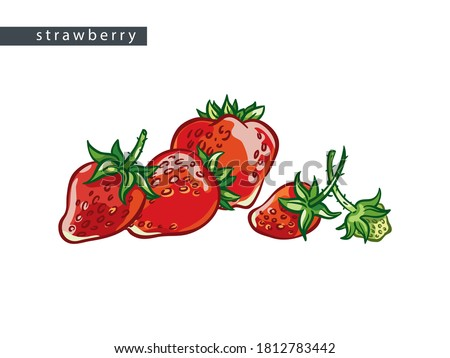 sketch red strawberries  four