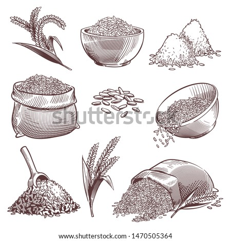 Sketch rice. Vintage hand drawn asian grains and ear. Pile of wild rice cereals, paddy sack. Agriculture engraving isolated vector healthy eating grained isolate set