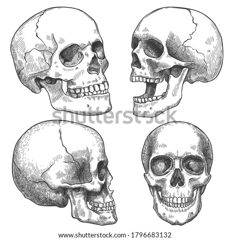 Sketch skull. Hand drawn anatomical skulls in different projection, monochrome tattoo artwork, anatomy face halloween horror vector elements. Engraved human skull with closed and open jaw