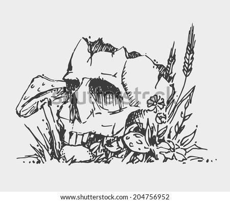 sketch skull mushrooms and