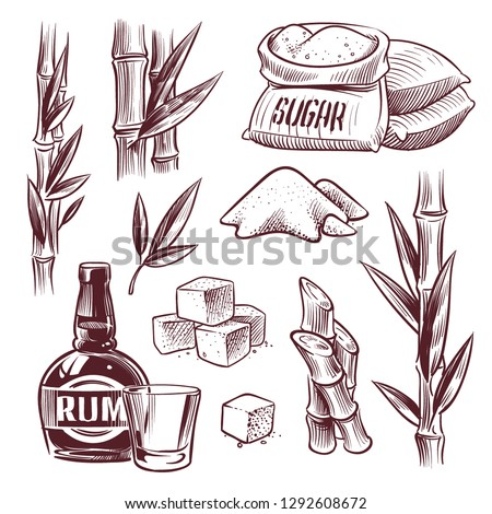 Sketch sugar cane. Sugarcane sweet leaf, sugar plant stalks, rum drink glass and bottle. Sugar manufacturing hand drawn vector set