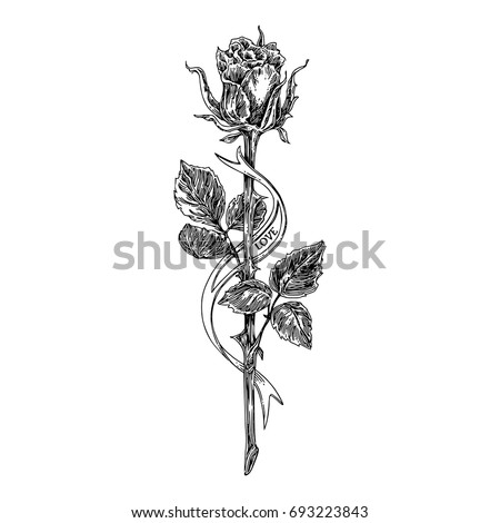 Sketch tattoo. Rose on a long stem and ribbon. Black end white. Vintage style. Vector illustration.