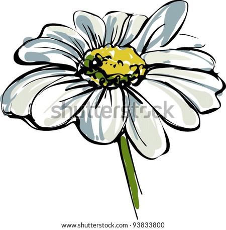 sketch wild flower resembling a daisy