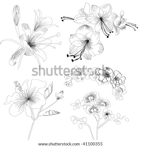 Sketch with flowers #41100355