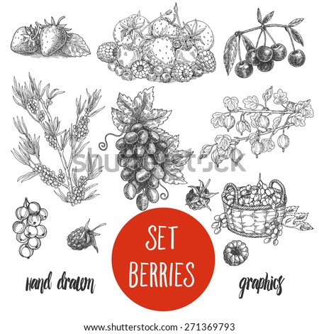 sketches and engravings berries