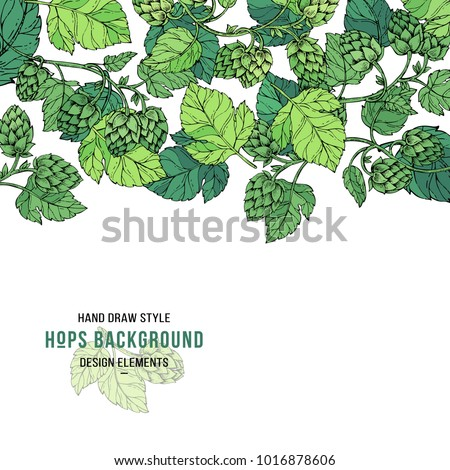 Sketches of hop plant, branch with leaves in engraving style, pattern card. Beer hop banner. Hops border design card. Beer ingredients vector illustration. Hand drawn style