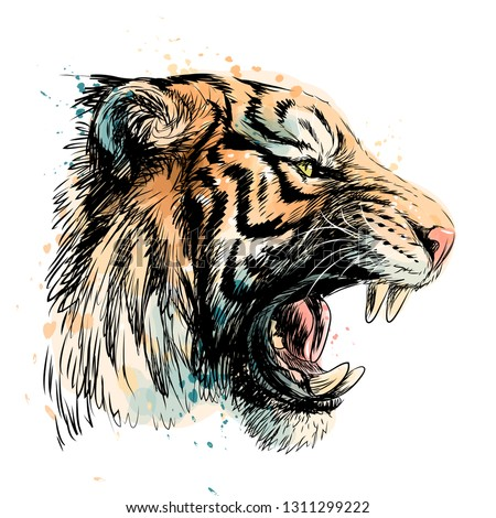 sketchy portrait of a tiger on