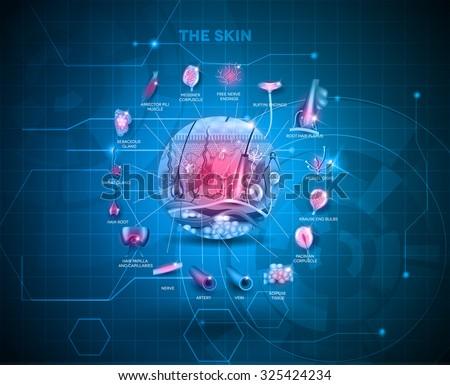 skin anatomy structure