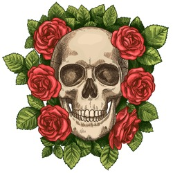 Skull and roses. Dead skeleton head and red flowers, hand drawn gothic tattoo graphic. Vintage scary halloween death sketch vector symbol. Colorful blossom and green foliage around head