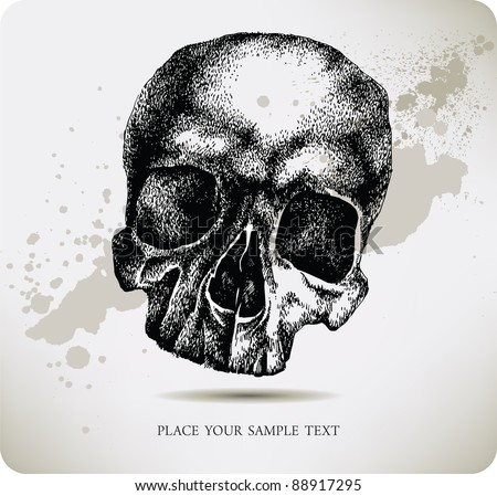 skull hand drawing vector