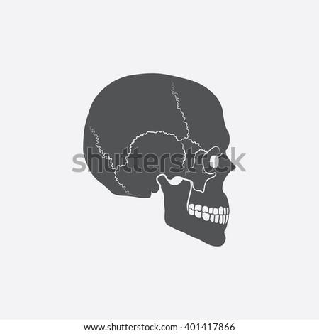 skull icon skull icon vector