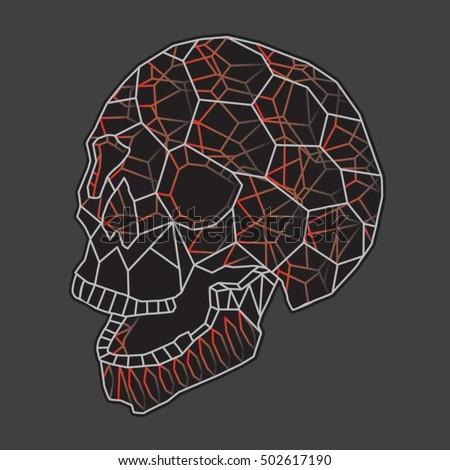 skull illustration  typography