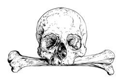 Skull realistic sketch. Vector illustration