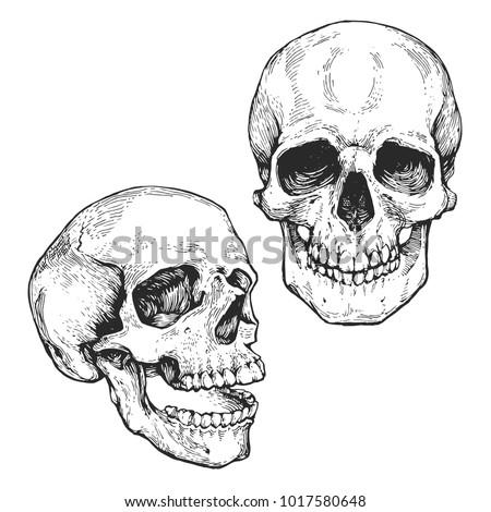 skull set  skeleton head
