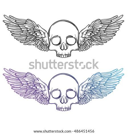 skull sketch drawing. line art...
