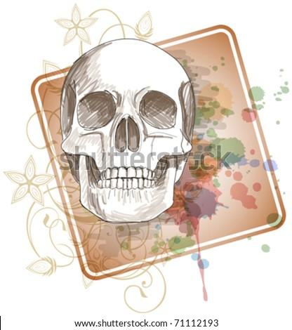skull sketch   floral