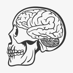 SKULL WITH BRAIN illustration vector