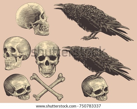 skulls  bones and crows design