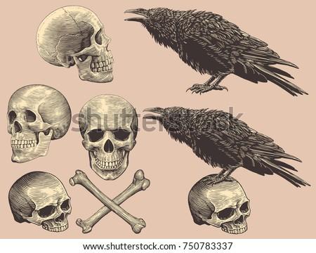 skulls  bones and crows design