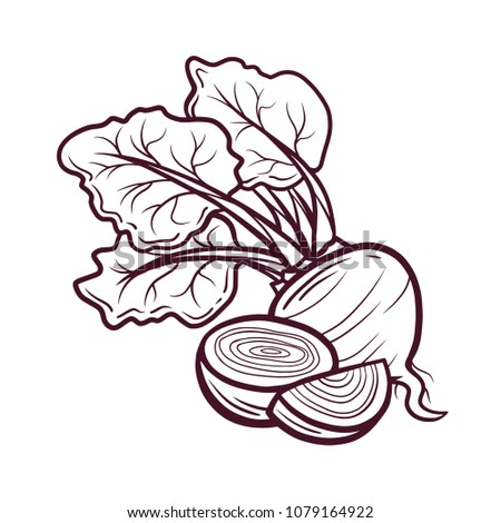 Sliced beet hand drawn vector