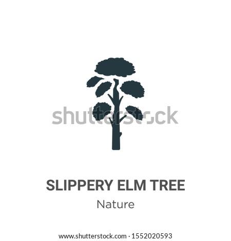 slippery elm tree vector icon