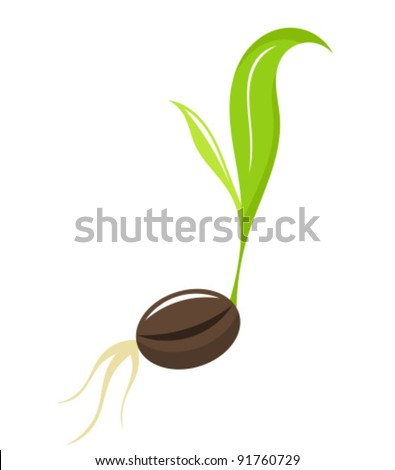 Small newborn plant - seedling. Vector illustration