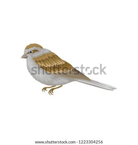 small winter bird with gray