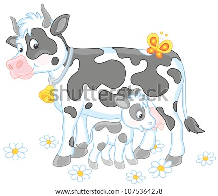 Smiling spotted cow and her small calf drinking milk