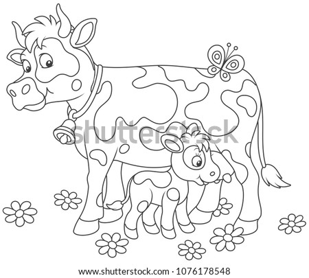 Smiling spotted cow and her small calf drinking milk, black and white vector illustrations in a cartoon style for a coloring book