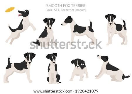 smooth fox terrier clipart