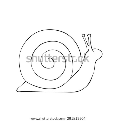 snail   drawn outline vector